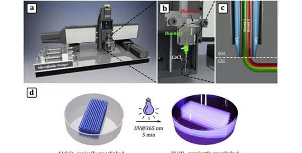 微流控改进的3D生物打印技术