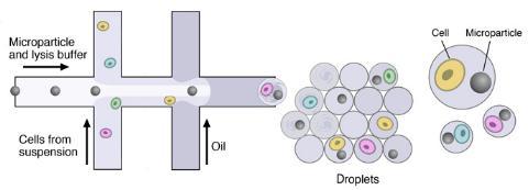 微流体装置