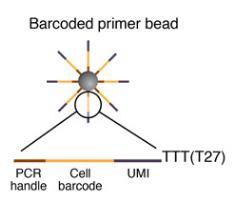 微粒上的引物序列