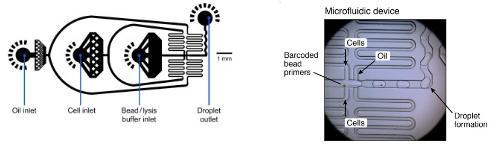 微流体设置