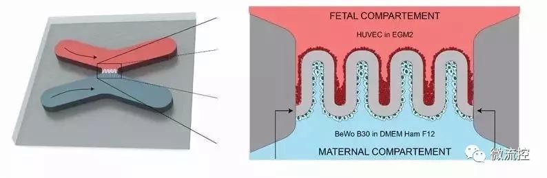 人造胎盘示意图