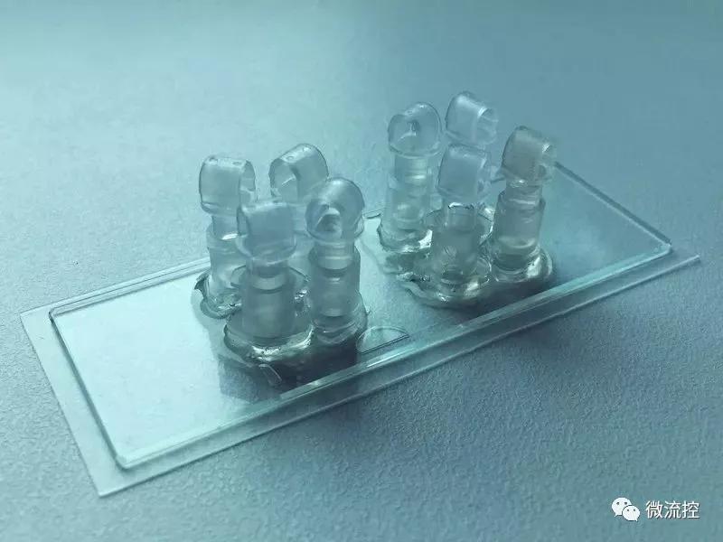 研究和分析胎盘用的器官芯片