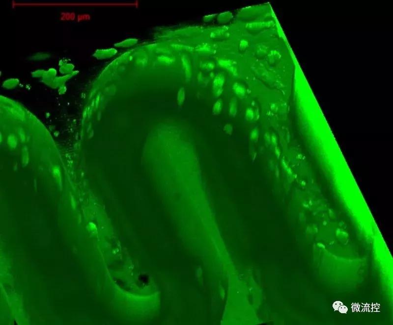 生物相容性水凝胶材料制造的3D打印微结构