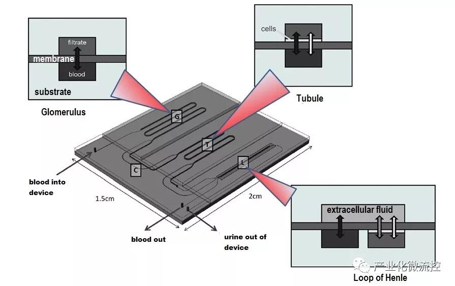具有三个功能单元横截面的微流控芯片装置的示意图