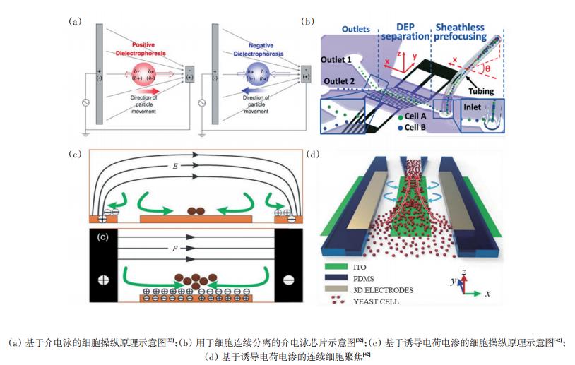 图3电控细胞操纵