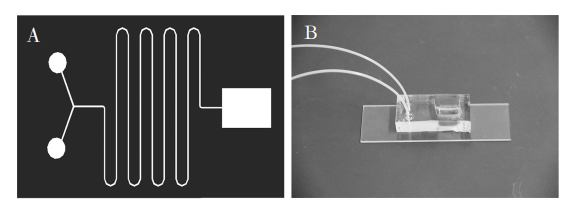 图1(A)芯片结构示意图;(B)制备的微流控芯片照片Fig.1(A)Diagramofchipstructure;(B)Photooffabricatedmicrofluidicchip的通道宽度相同。