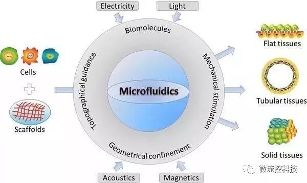 """Figure 1.利用微流控芯片""""合成""""组织示意图"""