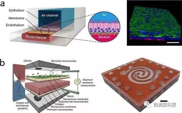 图4.通过微流控技术构建片层组织结构