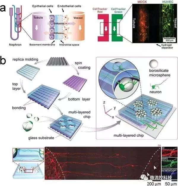 """图6.利用微流控芯片通过""""一步法""""合成组织。"""