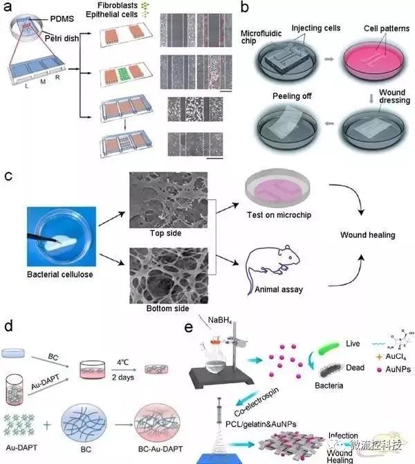 图7.基于微流控芯片的伤口愈合模型和伤口敷料筛选。