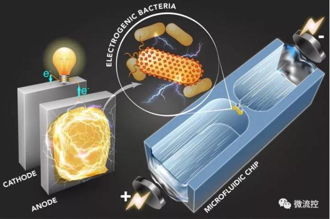 使用新的微流体过程筛选的微生物可用于发电或环境清理