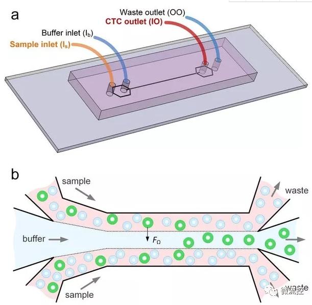 上图演示了肿瘤细胞与血液样本的分离(来自:Ian Papautsky)